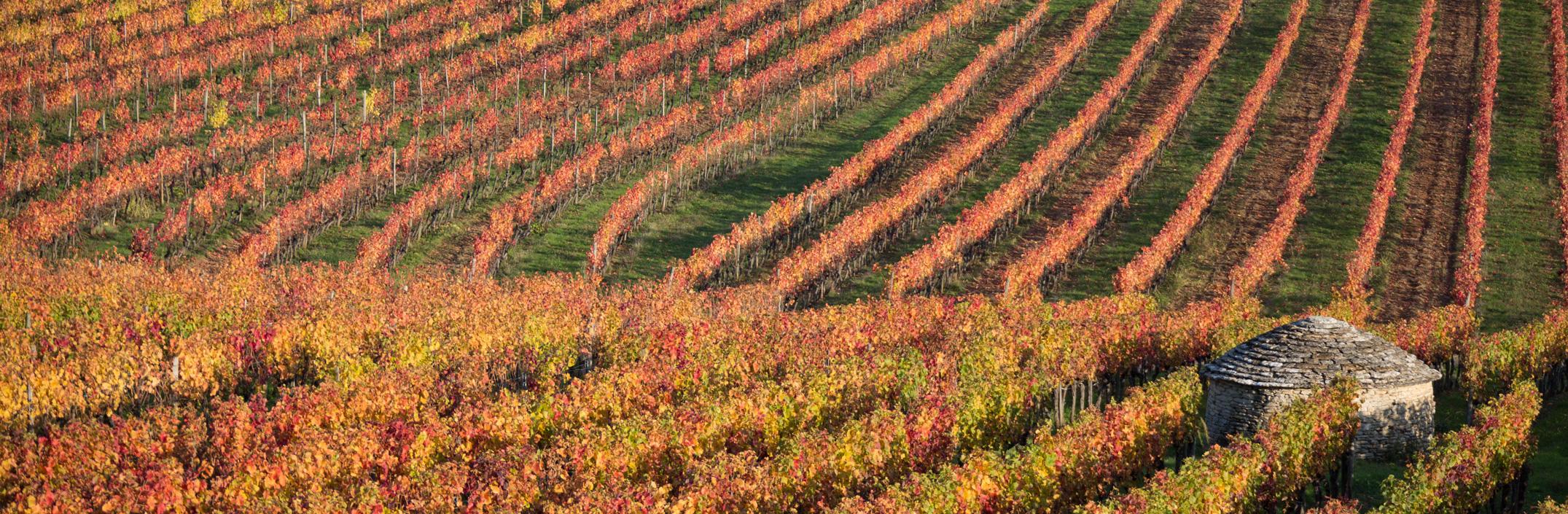 Gite à arcenant Bourgogne regis bouveret  Armelle photographe